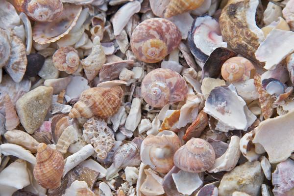 Foto stock: Mar · conchas · praia · cartão · postal