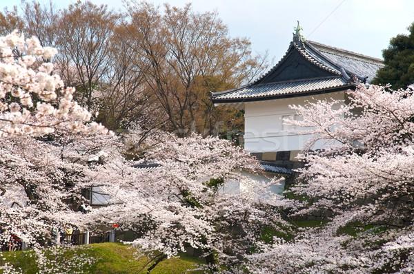 Tóquio palácio flor de cereja primavera edifício cidade Foto stock © Vividrange