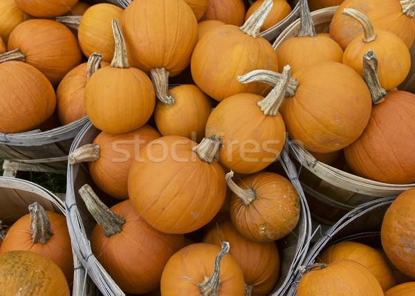 カボチャ 秋 オレンジ 自然 葉 ストックフォト © Vividrange