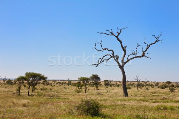 South Africa Stock photo © Vividrange