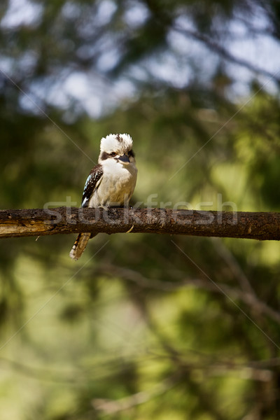 Baum Wald Bäume Vogel Feder Stock foto © Vividrange
