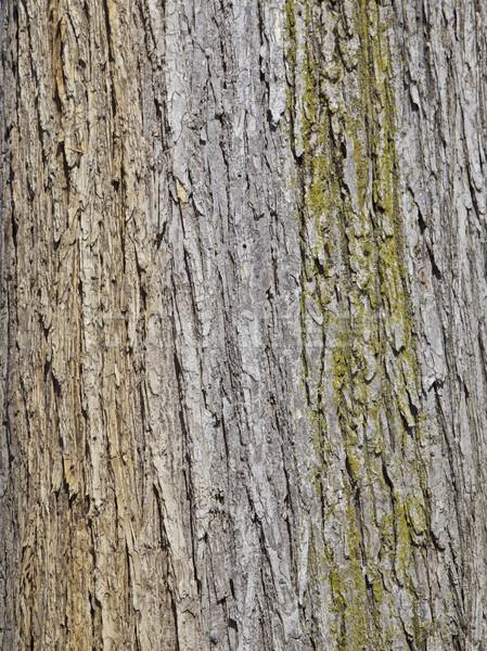 ツリー 樹皮 自然 庭園 支店 ストックフォト © Vividrange