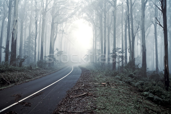 Stock photo: Misty forrest