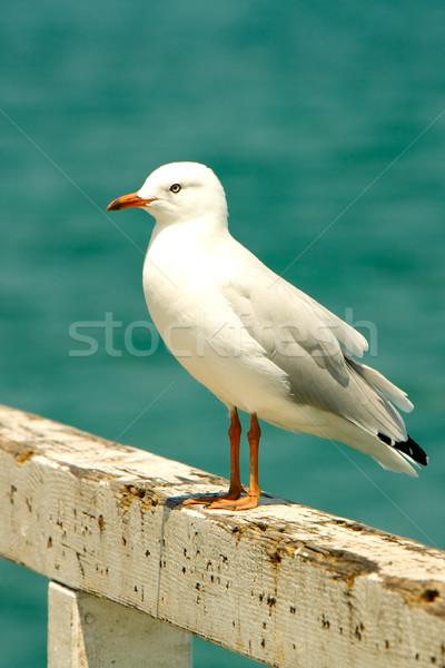 Seagull at the Beach Stock photo © Vividrange