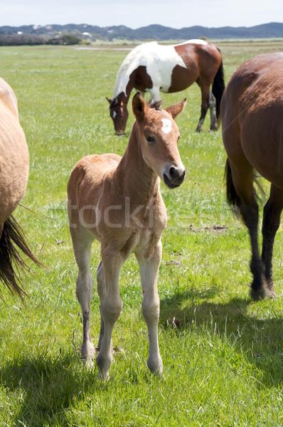 Horse Stock photo © Vividrange