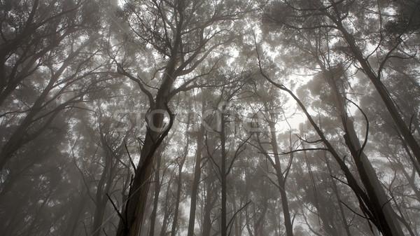フォレスト 表示 ツリー 春 森林 自然 ストックフォト © Vividrange