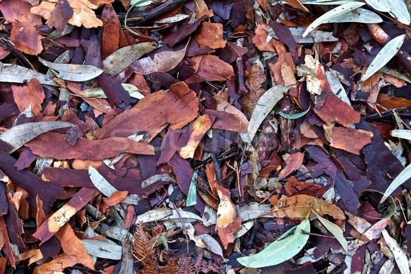 ストックフォト: 葉 · 紅葉 · 地上 · 自然 · 葉 · 緑