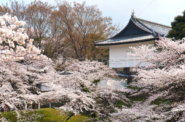 Stok fotoğraf: Tokyo · saray · kiraz · çiçeği · bahar · Bina · Asya