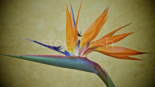 Foto stock: Pássaro · paraíso · flores · casa · laranja · África