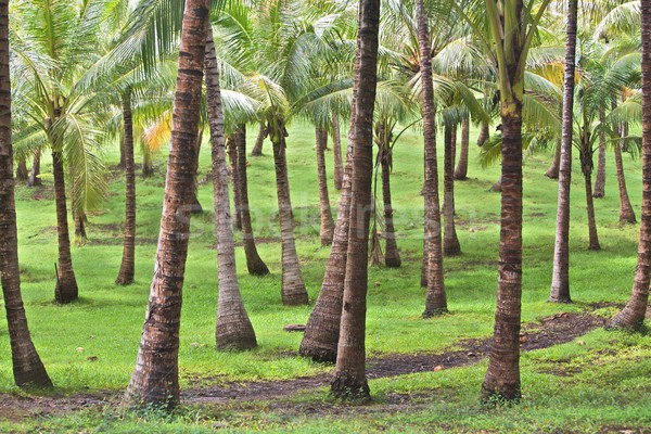 熱帯の島 熱帯 手のひら 休暇 島 ストックフォト © Vividrange