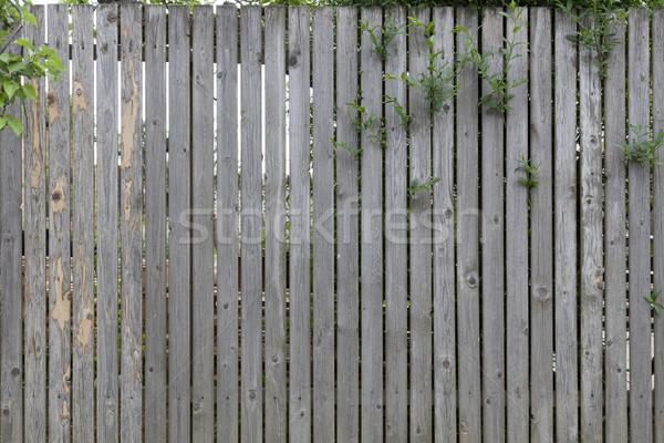 Gri ahşap çit yıpranmış ahşap Stok fotoğraf © vizualni