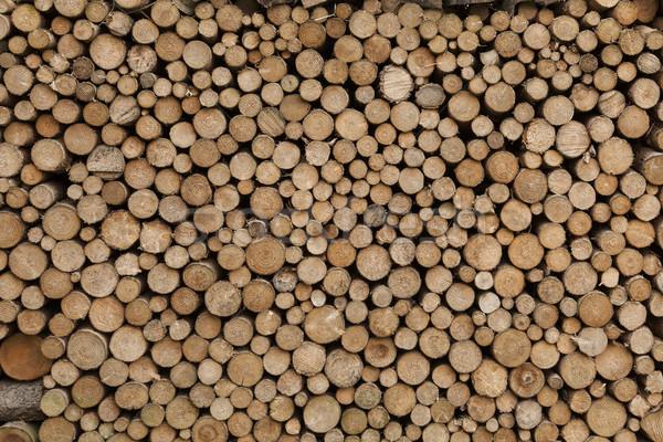 Ağaç büyük yıpranmış Stok fotoğraf © vizualni