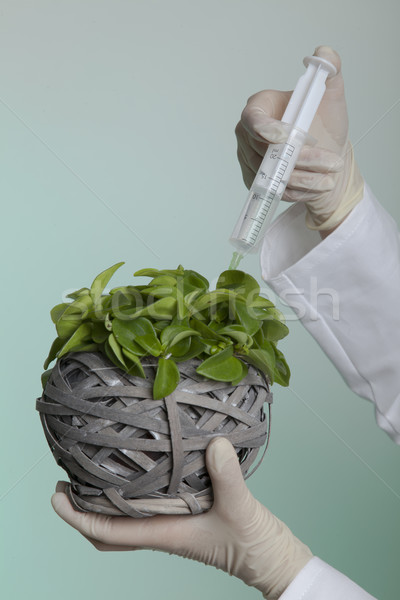 Genetikai manipuláció biológiai mérnöki Stock fotó © vizualni