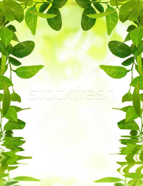 Levelek vízcseppek hullámok fiatal zöld levelek tavasz Stock fotó © vkraskouski