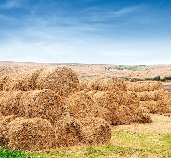 farm field with gathered crops Stock photo © vkraskouski