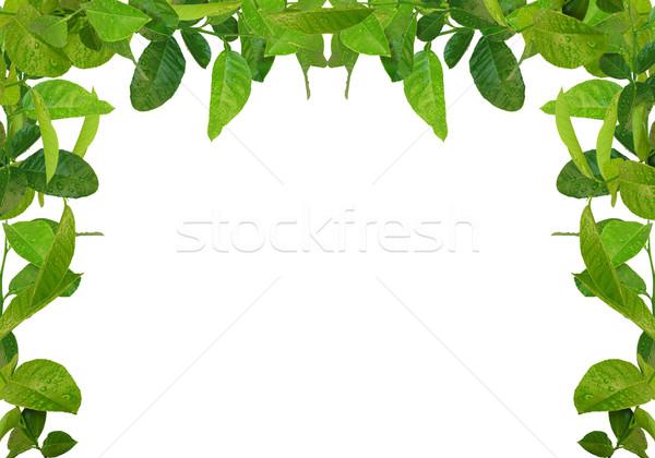 зеленые листья кадр дерево весны трава стены Сток-фото © vkraskouski