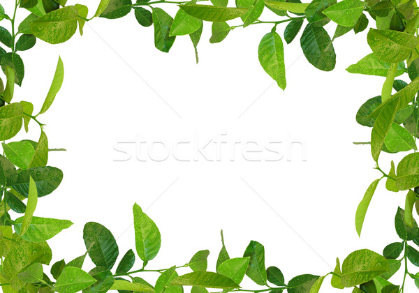 зеленые листья кадр аналогичный дерево весны Сток-фото © vkraskouski