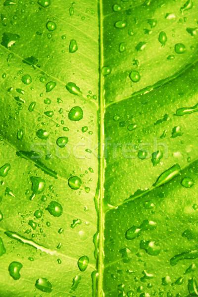 Yeşil yaprak su damlası çim soyut ışık Stok fotoğraf © vkraskouski