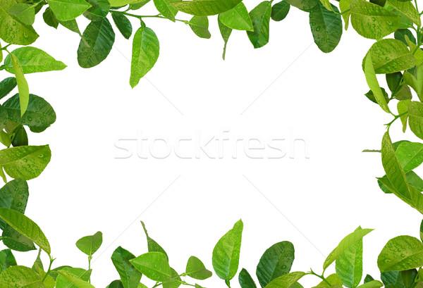 Folhas verdes quadro água árvore primavera beleza Foto stock © vkraskouski