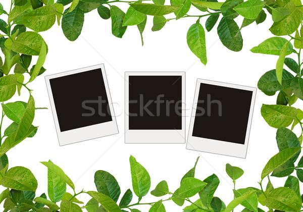 Yeşil yaprakları çerçeve ağaç fotoğrafları su bahar Stok fotoğraf © vkraskouski