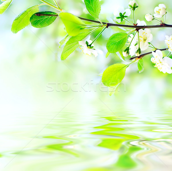 white spring flowers on branch on water waves Stock photo © vkraskouski