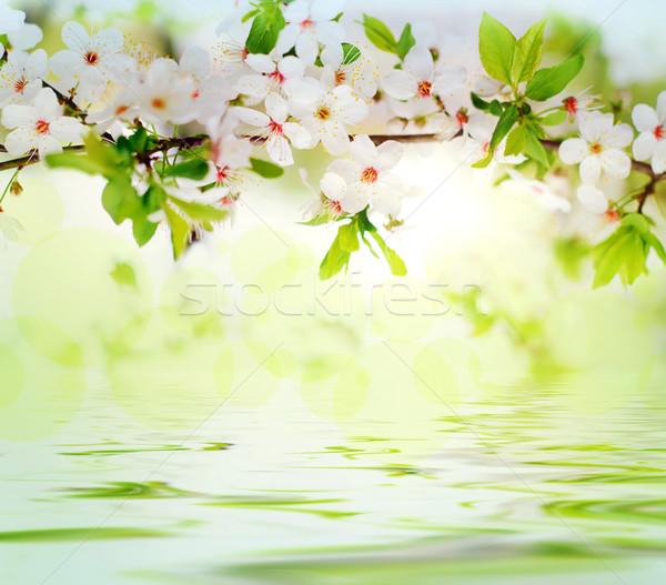 Weiß Frühlingsblumen Ast grau sonnig bokeh Stock foto © vkraskouski
