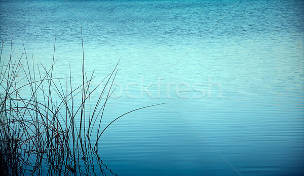 reed at night reflected in water Stock photo © vkraskouski