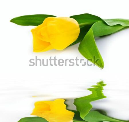 topaz tulip Stock photo © vkraskouski