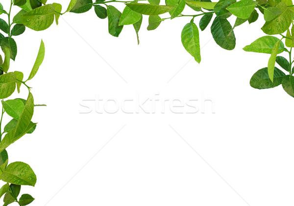 Yeşil yaprakları çerçeve ağaç bahar çim duvar Stok fotoğraf © vkraskouski