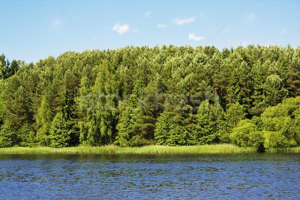 Tó kék víz erdő fa fa Stock fotó © vkraskouski