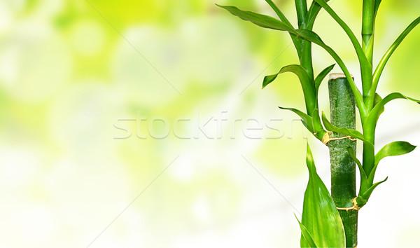 竹 葉 ショット 小さな 緑 ストックフォト © vkraskouski