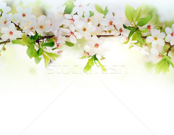 Fehér tavaszi virágok faág virágok fa fű Stock fotó © vkraskouski
