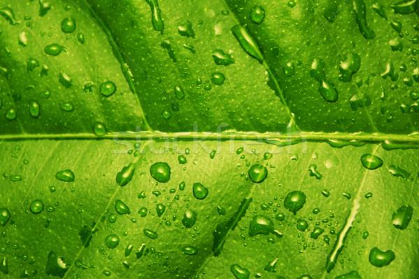 green leaf with water drops textured background Stock photo © vkraskouski