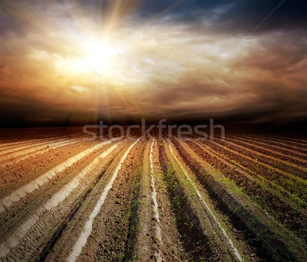Coltivato campo stormy cielo estate buio Foto d'archivio © vkraskouski