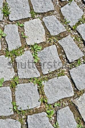 pavement stone tile with grass germination Stock photo © vlaru