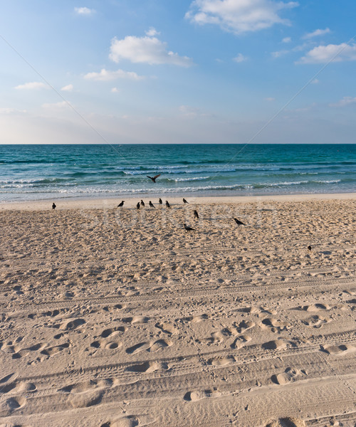 sandy beach with lots of footprints and a blue sky with clouds and birds on sand Stock photo © vlaru