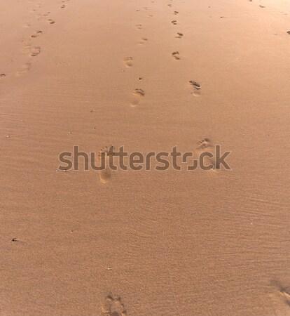 Plaża piaszczysta ślady plaży słońce charakter krajobraz Zdjęcia stock © vlaru