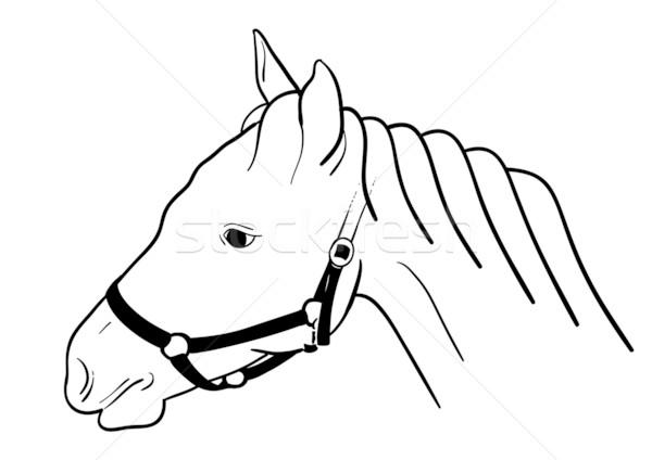 horse head Stock photo © vlastas