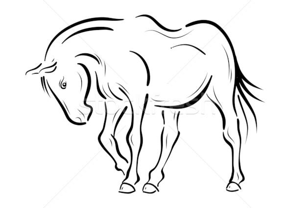 horse Stock photo © vlastas