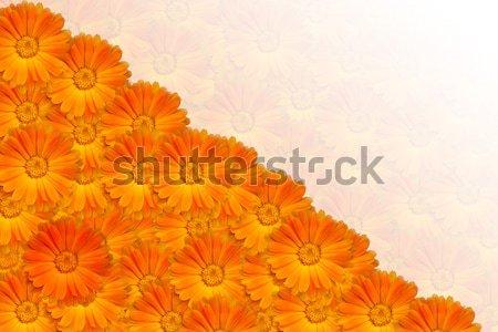 Oranje vector bloemen voorjaar natuur kunst Stockfoto © vlastas