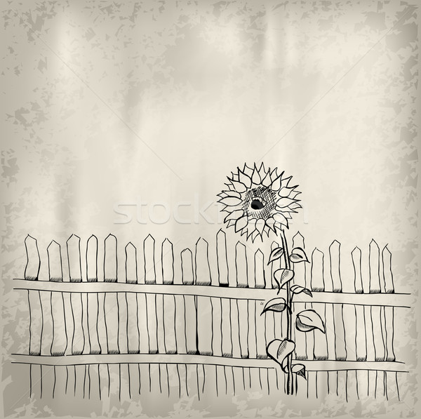 sunflower Stock photo © vlastas