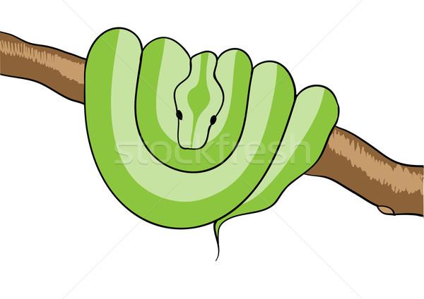 snake Stock photo © vlastas