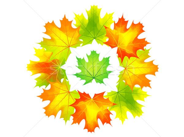 Automne couleur texture résumé nature beauté Photo stock © vlastas