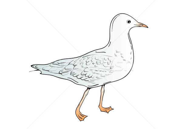 seagull Stock photo © vlastas
