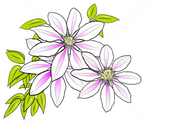 Bloem witte natuur blad roze grafische Stockfoto © vlastas