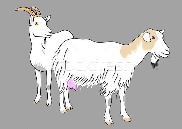 goat Stock photo © vlastas
