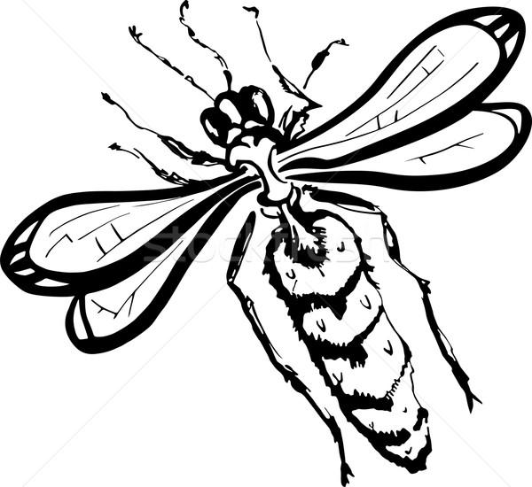 Vespa preto e branco ilustração branco preto abelha Foto stock © Volina