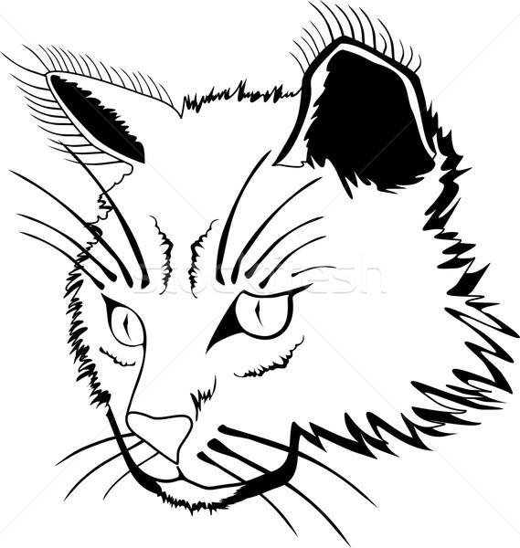 Gato cara estilizado isolado branco natureza Foto stock © Volina