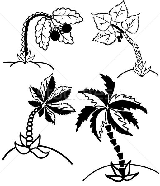Palmeiras coleção árvores silhuetas árvore abstrato Foto stock © Volina
