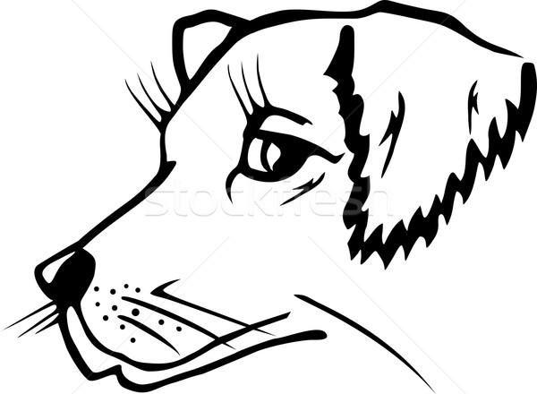 собака голову иллюстрация белый лице искусства Сток-фото © Volina
